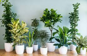 تحقیق درباره گیاهان آپارتمانی