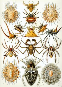 گروه مختلف عنکبوتیان (عنکبوت ، رتیل، عقرب، کنه ) - word
